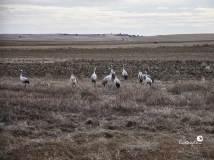 ecoquijote-ecoturismo-cuenca-laguna-de-el-hito-birding-grullas-posadas