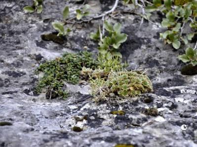 Vegetación rupícola en Los Callejones de Las Majadas