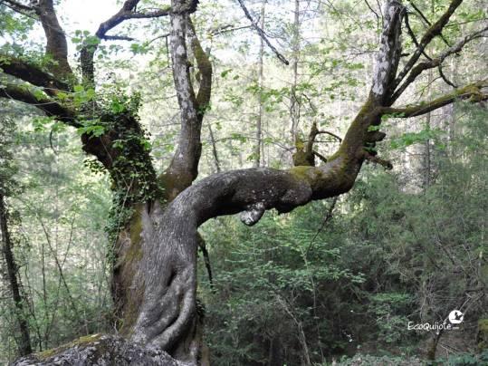 ecoquijote-ecoturismo-cuenca-ruta-la-hoz-de-beteta
