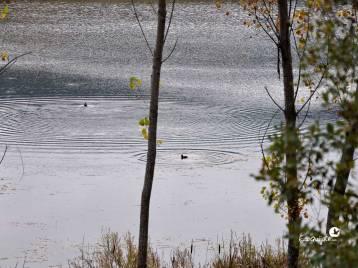 ecoquijote-ecoturismo-cuenca-birding-laguna-de-una